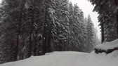 caminho : moving car in winter snow forest Stock Footage