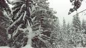 moving car in winter snow forest Wideo