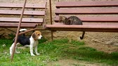 Beagle puppy and cat on swing