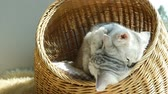 śmieszne : Two kittens playing in a basket bed