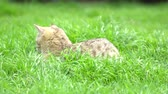 feline : Cute kitten playing in the garden under sunlight