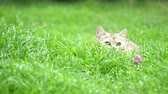 pet : Cute kitten playing in the garden under sunlight