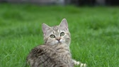 tabby : Cute kitten playing in the garden under sunlight