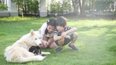 cachorro : Happy Asian children playing with siberian husky dog in the garden slow motion Vídeos