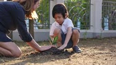 ochrana : Asian mother and son planting young tree in black soil together slow motion