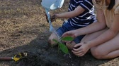 terra : Asian sibling planting and watering young tree on summer day Vídeos