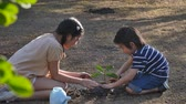 tea pot : Asian sibling planting and watering young tree on summer day Stock Footage