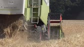 moers : Moers  Germany - June 29 2017 - Combine harvester reaping wheat Stock Footage