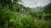 (1225) Mountains Summer Wildflowers Valley Aspen Meadow LOOP Stock Footage