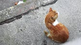 trough : Bird view on white and brown cat sitting Then walking in the street. Outdoors movie studio in colors. HD 1080