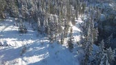 Aireal view on winter forest Stock Footage