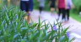perder : Defocused Chinese people morning exercise walking in park Vídeos