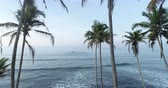 non kentsel : Landscape with coconut trees on tropical seaside drone flying backward 4k