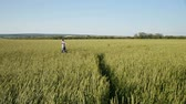 Carefree young  man running in wheat field at summertime