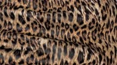 пантеры : Skin of a leopard in motion. Background of the canvas ripples.