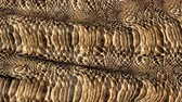 cuero : Snake skin in the movement. Background of the ripples in the wind. Archivo de Video
