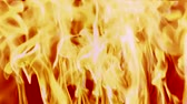 nobody : The wall of intense fire background. Burning natural flame texture.