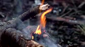 futótűz : Tree trunks are burning in the forest.