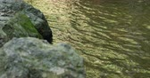 stream of river water with stone rock in green nature forest Stock mozgókép