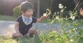 boy child sitting interested flower on lawn grass with soft sunlight in the summer day Stock mozgókép