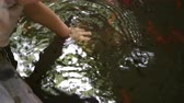 interessante : baby hand playing in water pond with fish