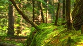 ウッドランド : Dead Tree Trunk Overgrown With Moss Deep 4K Time Lapse