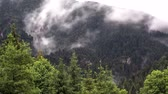 nebel : 4K Timelapse Evaporation after rain in the forest Videos