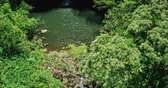 vibrante : Aerial view flying over amazing waterfall pool in tropical rain forest jungle Vídeos