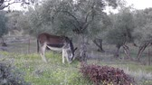 осел : Donkey grazing in the field