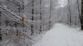 carrancudo : Walking in a winter forest during a snowfall Vídeos