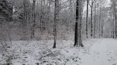 myśl : Walking in a winter forest during a snowfall Wideo