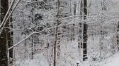 pensamento : Walking in a winter forest during a snowfall Vídeos