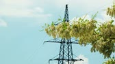 акация : In the frame there is a branch of acacia in heavy blossom swaying on the light wind with electric pylon and blue sky on background. Changing focus from foreground to background.