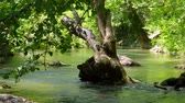 Flooding in the river flooded tree Stock Footage