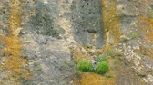 In the ledge on the rock there is a nest with birds. Stock Footage