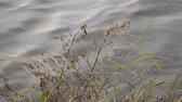 water surface white grass