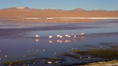 avaroa : Flamingoes in the salty lake Laguna Colorada in the Eduardo Avaroa Park in Bolivia, South America