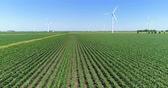 penge : Aerial view of fresh green crops on countryside field and Wind turbine, agriculture industry