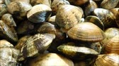 marisco : clams texture Stock Footage