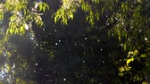 нечеткий : Poplar fluff flies in the forest, background of green leafy dark trees on a sunny day