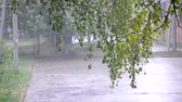 windy : In the foreground is a branch of a tree with green leaves. On the background on the street there is a heavy rain downpour, a strong wind is blowing, on asphalt puddles with bubbles