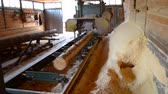 forest : Sawmill. Process of machining logs in equipment sawmill machine saw saws the tree trunk on the plank boards. Wood sawdust work sawing timber wood wooden woodworking Stock Footage