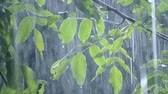 nozes : Heavy rain shower downpour cloudburst rainfall comes in the daytime. Rain drops dripping on the big green leaves of the tree Walnut close-up. Background concept rainy driving pouring rain with sound Stock Footage