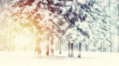 snow covered spruce : Beautiful snow-covered trees spruce in the forest in winter during a snowfall. Sun, sunny day, sun rays, sunny spot. Fantastic Fairytale Magical Landscape. Christmas Winter New Year Scenery background Stock Footage