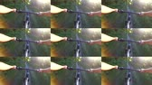 collage : Abstract animation wall. Person cycling on bicycle ride green forest on sunny day. Biking on path in forest. Point of view pov mtb gopro action camera. Multicam split screen group video montage Stock Footage