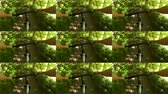 bisikletçi : Abstract animation wall. Person cycling on bicycle ride green forest on sunny day. Biking on path in forest. Point of view pov mtb gopro action camera. Multicam split screen group video montage Stok Video