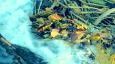 листовка : Fallen yellow leaves waterfall flow water close-up autumn season. Beautiful autumn natural backdrop. Sunny autumn concept. Стоковые видеозаписи