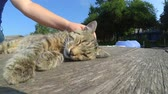 домашнее животное : Girl strokes cat lying wooden surface of old wooden planks warm summer day. Concept of gentle warm relationships between animals and people
