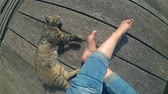 nu : POV of Girls legs and lying cat on the surface of old wooden planks. Top view. Rest relax summer. Girl with a cat sitting on wooden planks on a warm sunny day. Vacation holiday