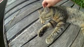 ütüleme : Girl strokes cat lying wooden surface of old wooden planks warm summer day. Concept of gentle warm relationships between animals and people